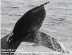 whale fluke March 14 with citation