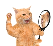 dreamstime_s_59832435 cat mirror lion