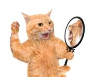 dreamstime_s_59832435 cat mirror lion